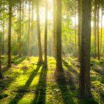 Metsään sijoittaminen