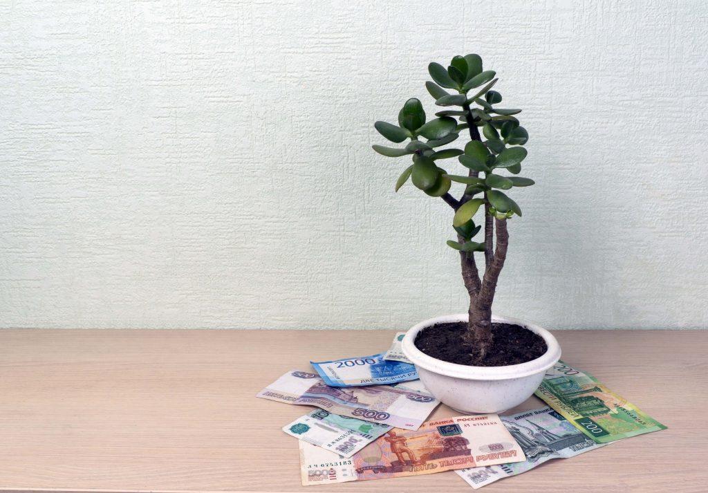 Kasvaako raha puussa