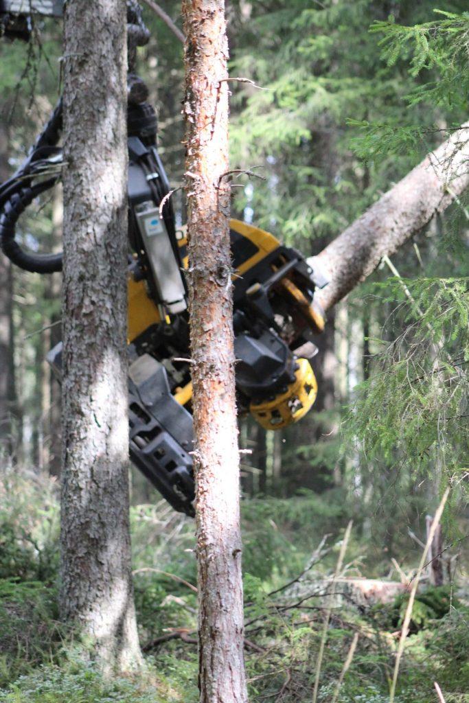 Miten metsään sijoitetaan?