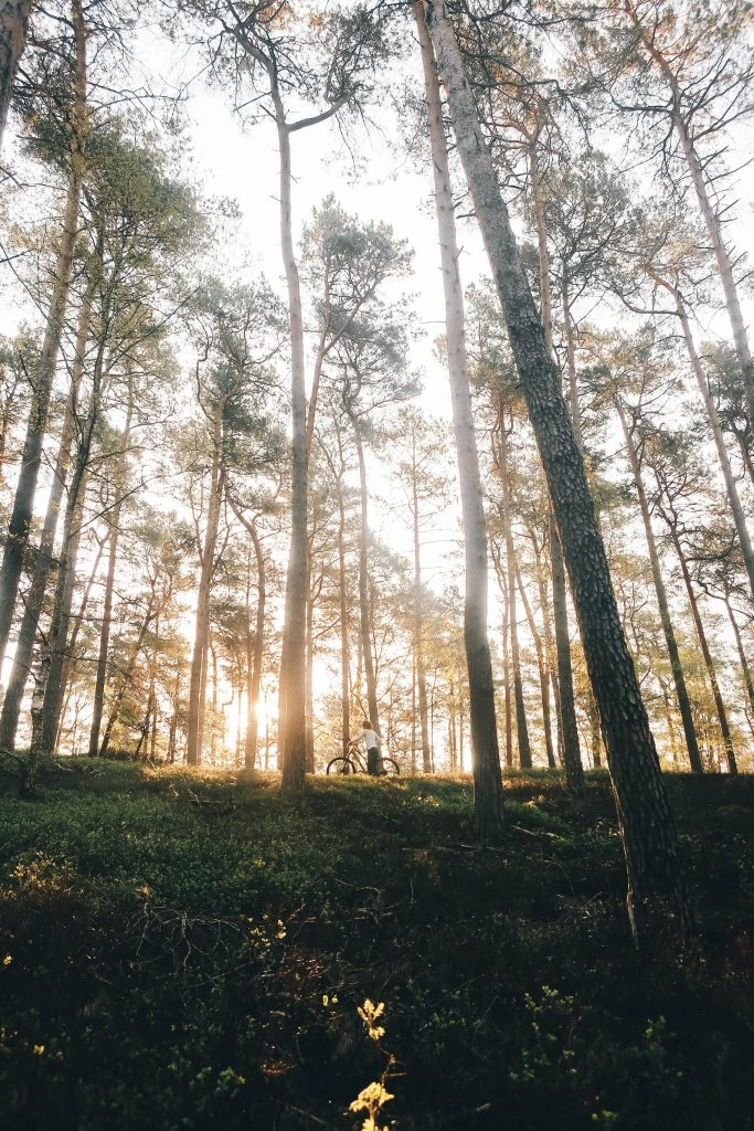 Metsäsijoittamisen riskit