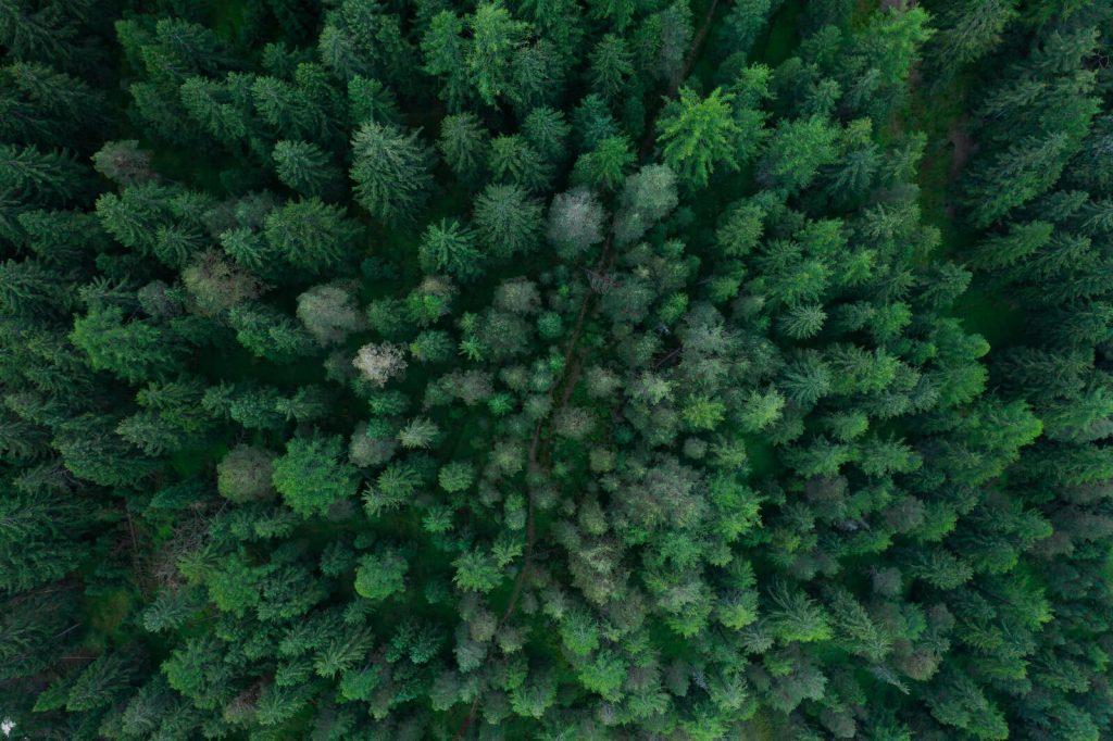 Onko-metsa-hyva-sijoitus